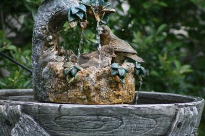Bird Bathing in fountain