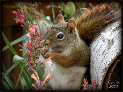 Squirrel mom with flowers