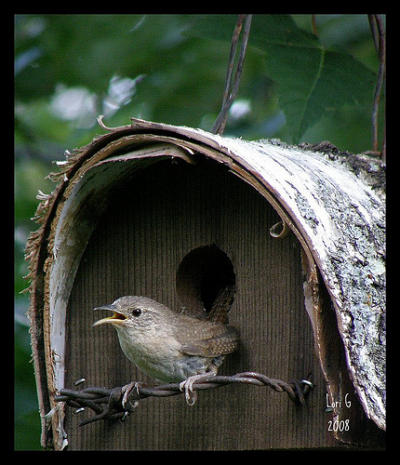 Wren at Home