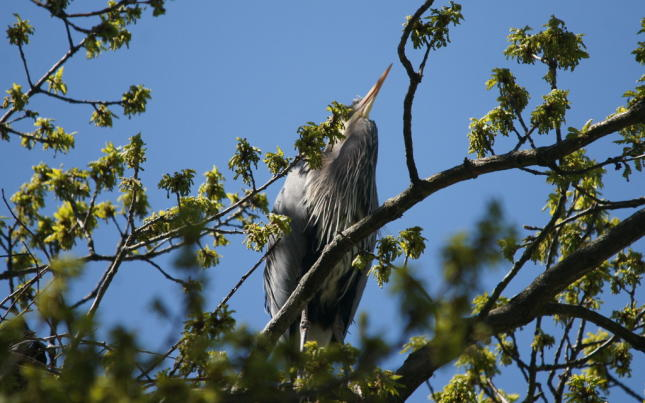 Stanley Park Rookery Photos